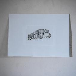 Grafika ryba Napoleon
